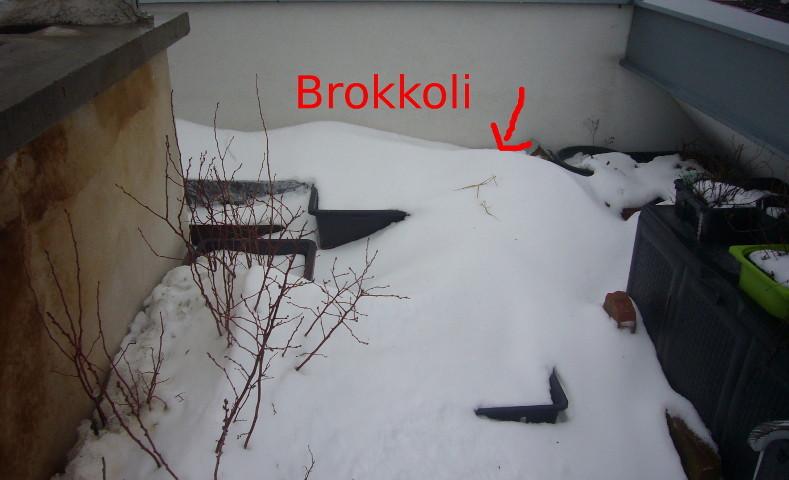 brok2-1